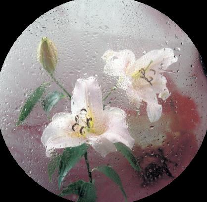 tubes_fleurs_tiram_946