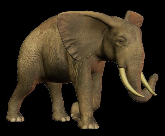 tubes_elephants_tiram_12
