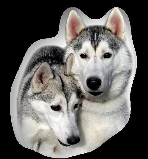 chien_tiram_187