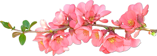 tubes_fleurs_tiram_91
