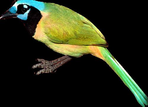 tubes_oiseaux_tiram_16