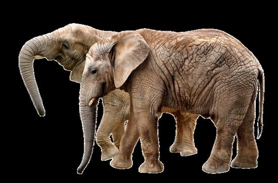 tubes_elephants_tiram_477