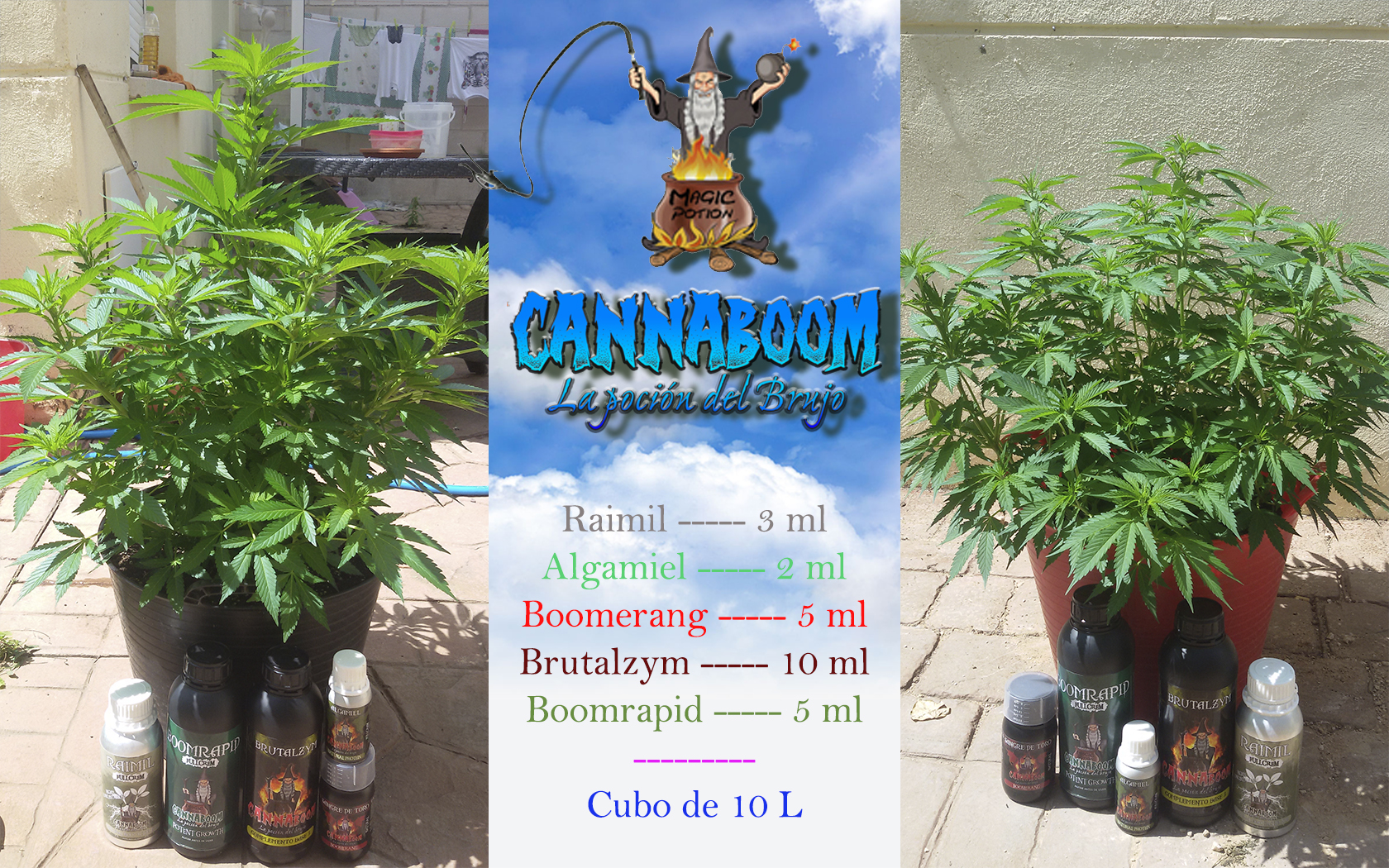 El Brujo a Latigazos ...(Sweet Seeds)+(CannaBooM)(2018) 1_junio_riego