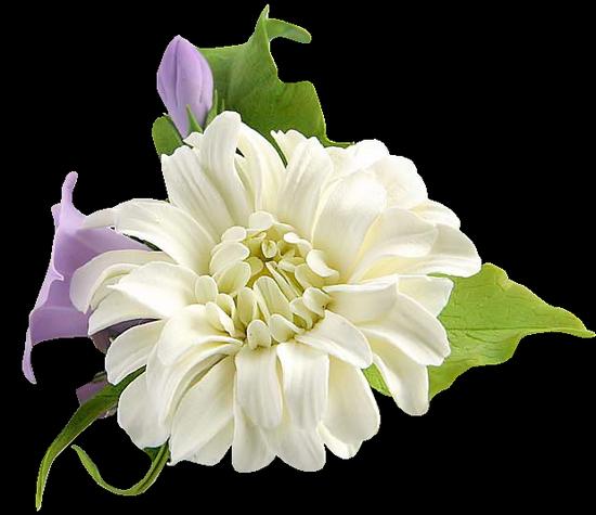 tubes_fleurs_tiram_227