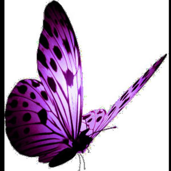 tubes_papillon_tiram_358