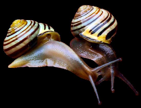 tubes_escargots_tiram_54