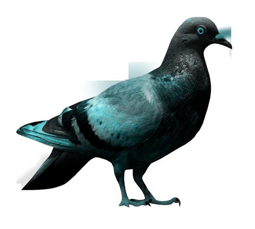 tubes_oiseaux_tiram_49