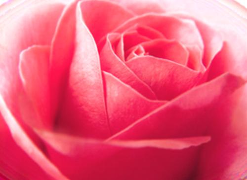 tubes_fleurs_saint_valentin_tiram_11