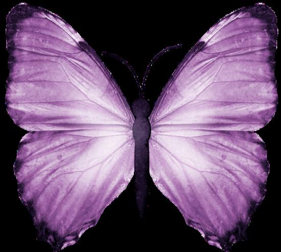 tubes_papillon_tiram_290