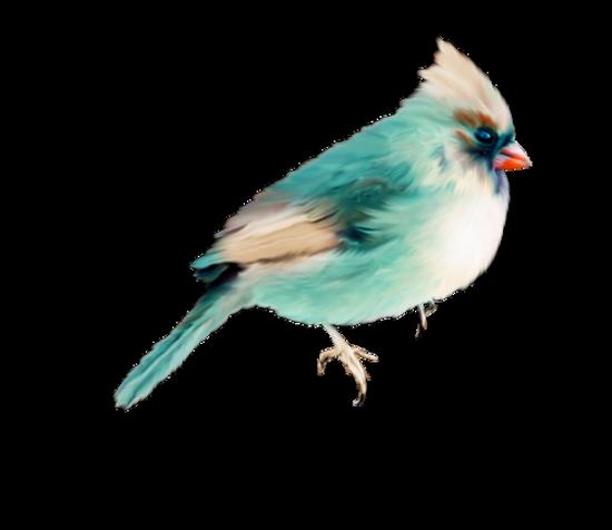 tubes_oiseaux_tiram_130
