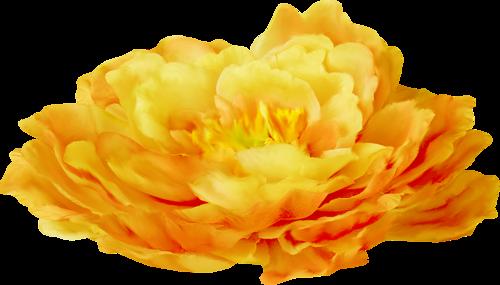fleurs_paques_tiram_45