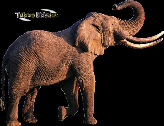 tubes_elephants_tiram_37
