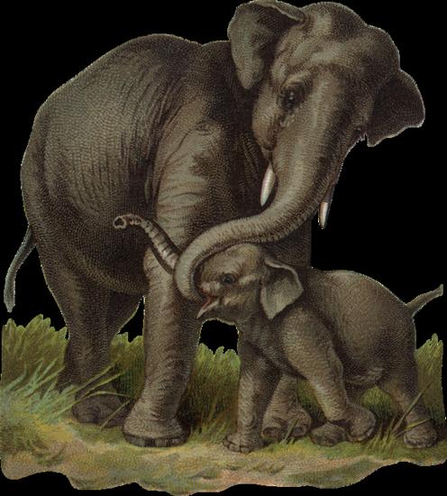 tubes_elephants_tiram_118