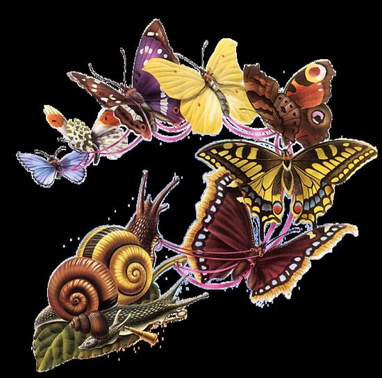 tubes_papillon_tiram_481