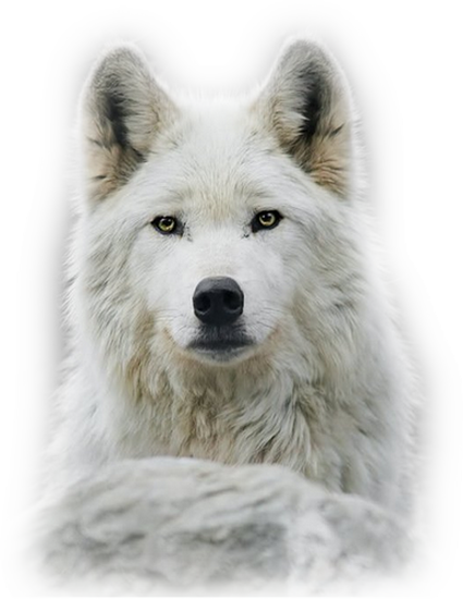 animaux-noel-tiram-42