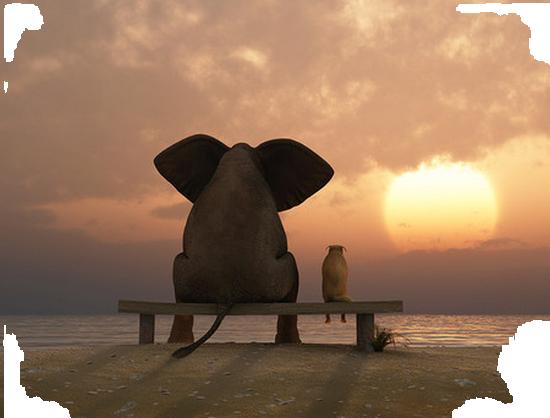tubes_elephants_tiram_0