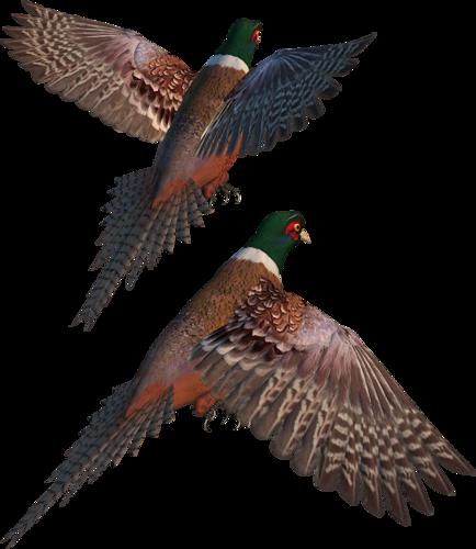 tubes_oiseaux_tiram_145