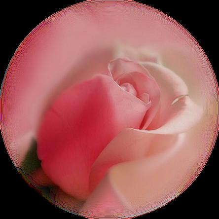 tubes_fleurs_saint_valentin_tiram_82