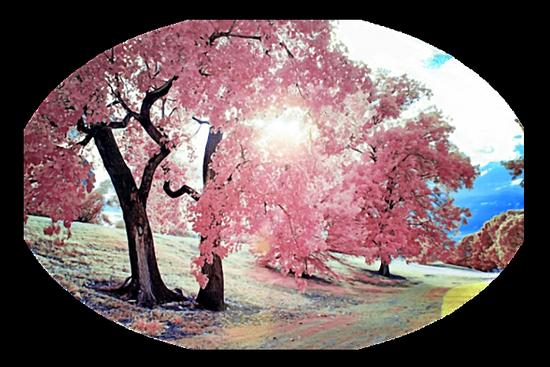paysage_tiram_405