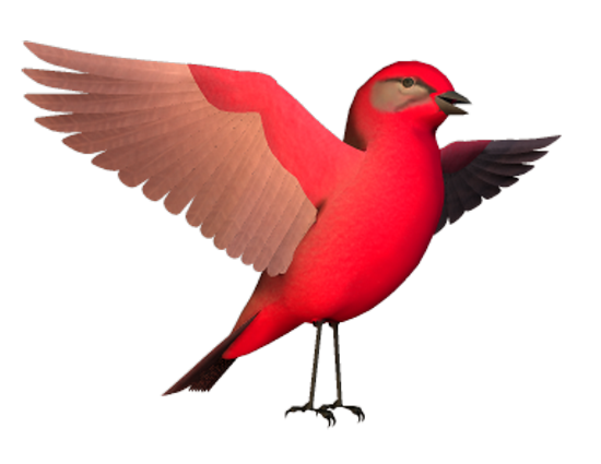 tubes_oiseaux_tiram_80