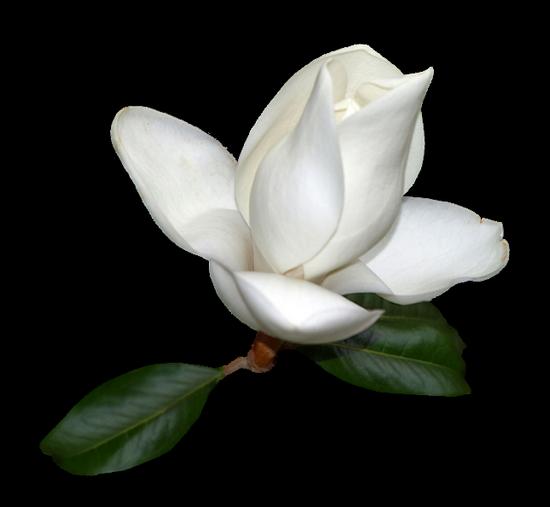 tubes_fleurs_tiram_333