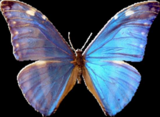 tubes_papillon_tiram_122