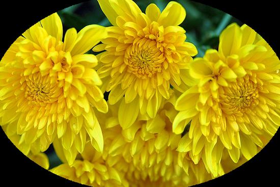 tubes_fleurs_tiram_188