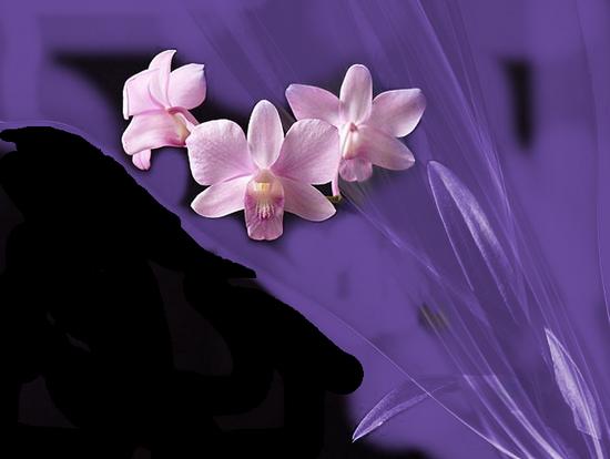 tubes_fleurs_tiram_125