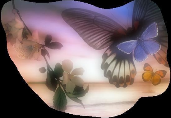 tubes_papillon_tiram_641