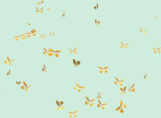tubes_papillon_tiram_482