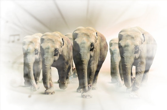 tubes_elephants_tiram_509