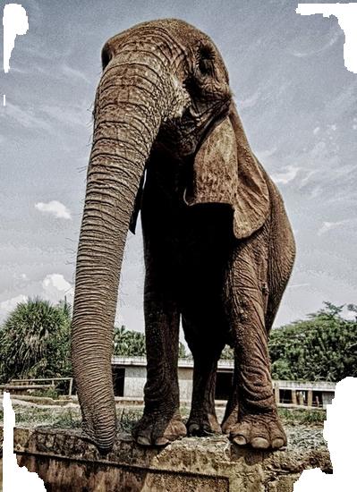 tubes_elephants_tiram_85