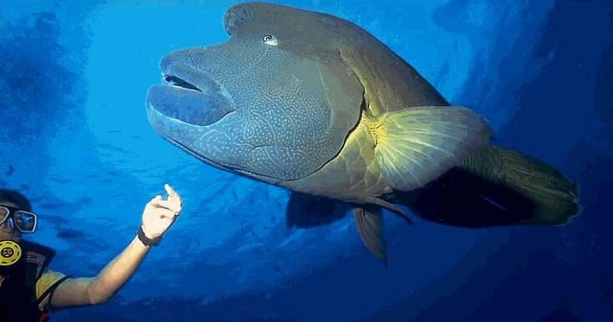 Dubai Mall Aquarium Underwater Zoo Diving ticket Prices