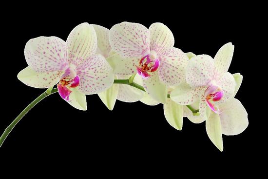 tubes_fleurs_tiram_277