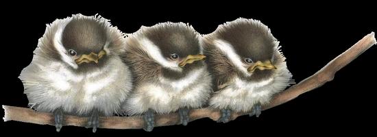 tubes_oiseaux_tiram_156