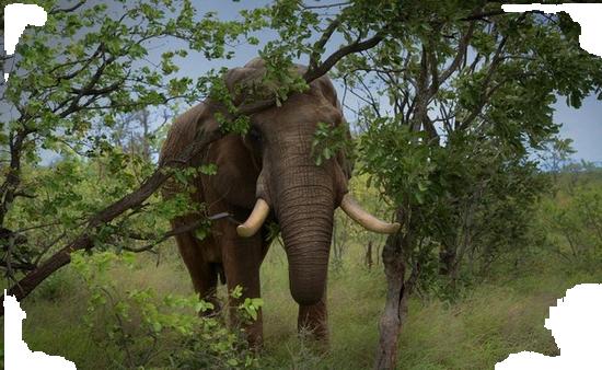 tubes_elephants_tiram_69