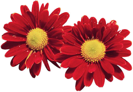 tubes_fleurs_tiram_851