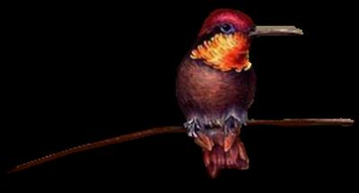 tubes_oiseaux_tiram_238