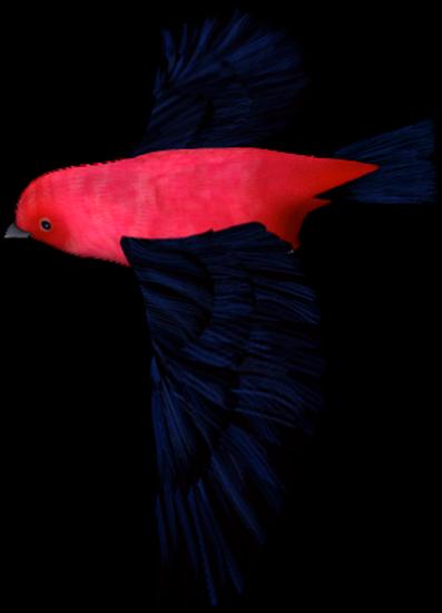 tubes_oiseaux_tiram_207