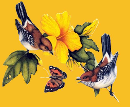 tubes_oiseaux_tiram_224