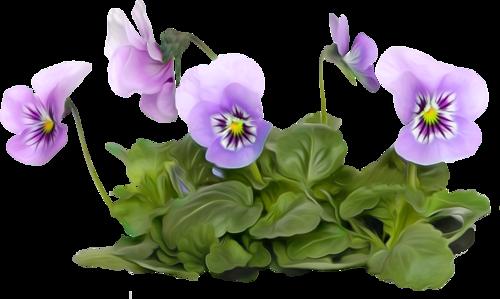 tubes_fleurs_tiram_582