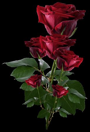 tubes_fleurs_tiram_769