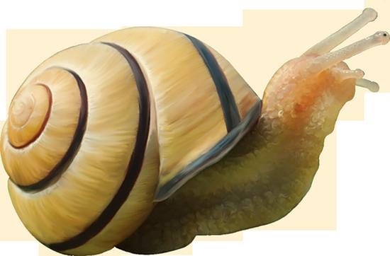 tubes_escargots_tiram_136