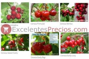 Todas las clases o tipos de cerezas (Burlat, Lapins, Frisco, Van, Santina, Bing...)