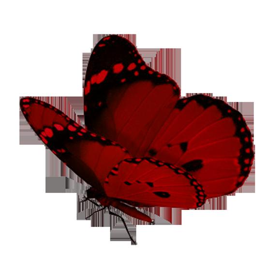 tubes_papillon_tiram_82