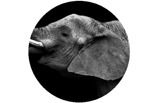 tubes_elephants_tiram_603