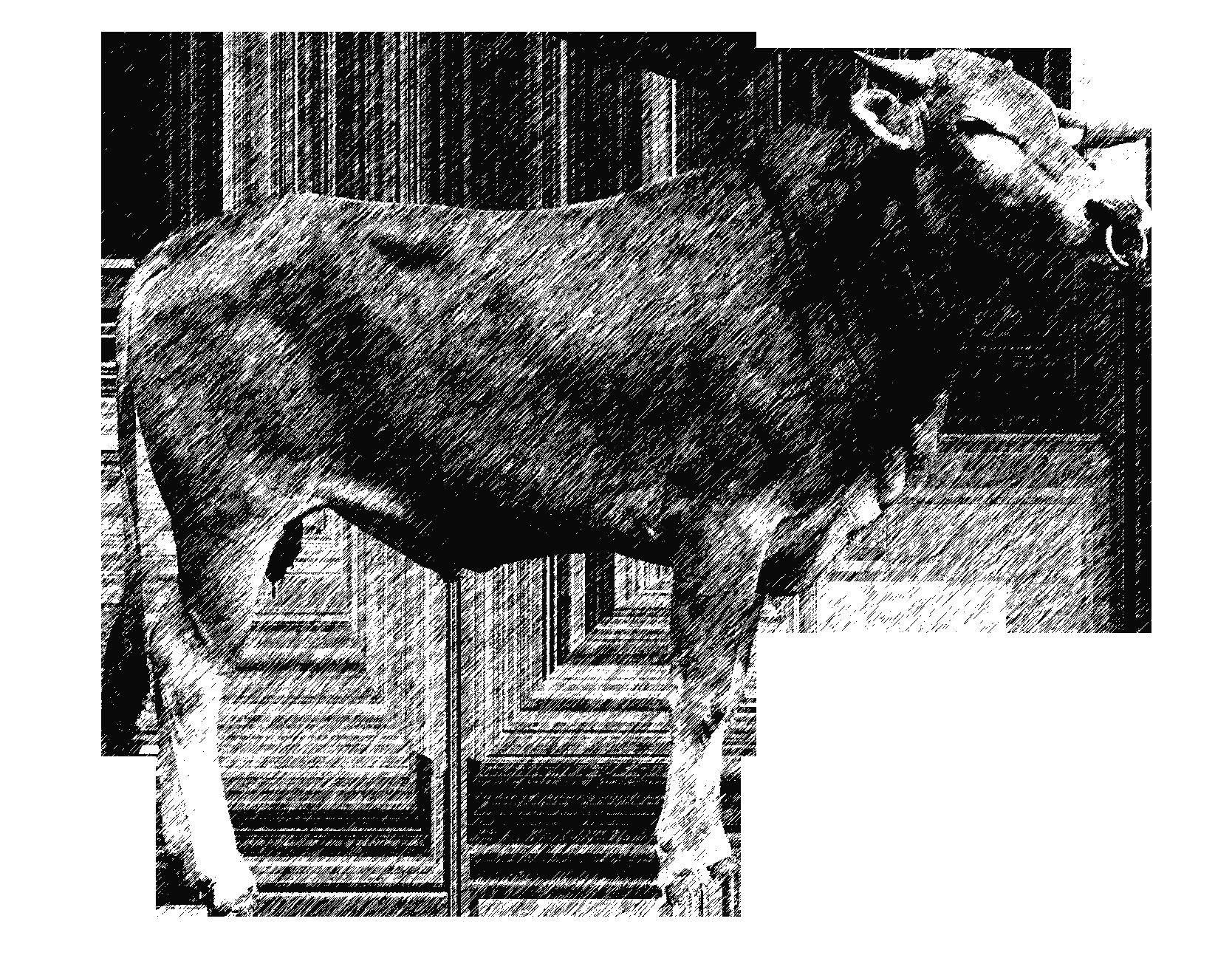 lembua