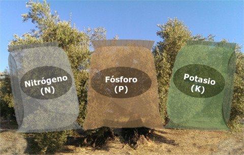 Abonado del olivo, abono complejo npk, nutrientes necesarios para el olivo, Nitrógeno, Fósforo, Potasio, Boro