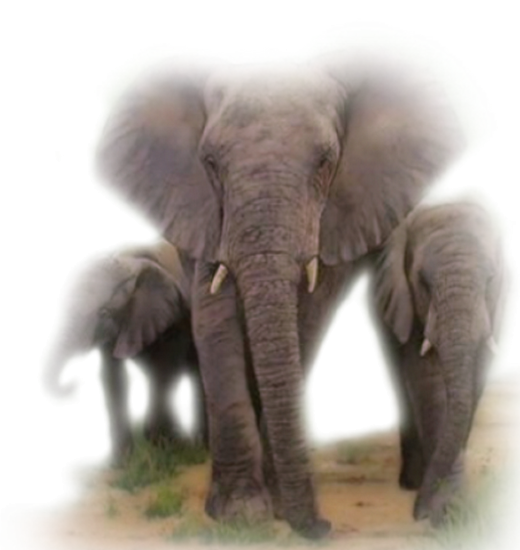 tubes_elephants_tiram_121