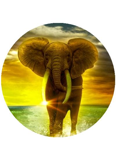 tubes_elephants_tiram_264